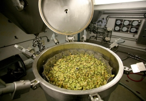 Top of Hop Torpedo